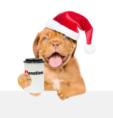 Happy puppy in red christmas hat with a donation can, asking money above white banner. isolated on white background.