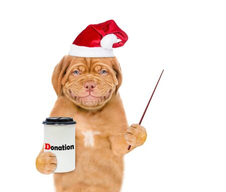Smiling mastiff puppy in red christmas hat with a donation can, asking money for  charity and pointing away on empty space. isolated on white background.