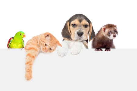 Group of pets  - ferret, parrot,cat and dog over empty white banner. isolated on white background. Empty space for text. Banco de Imagens