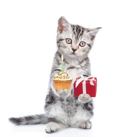 Chaton drôle tenant un petit gâteau et une boîte-cadeau. isolé sur fond blanc.
