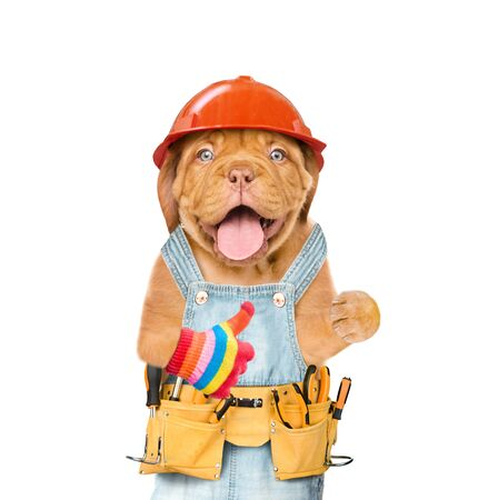 Funny puppy worker in hard hat with tool belt showing thumbs up. Isolated on white background. Banco de Imagens