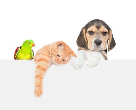 Group of pets  - parrot,cat and dog over empty white banner. isolated on white background. Empty space for text.