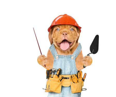 Funny puppy builder with a trowel pointing away on empty space. Isolated on white background.