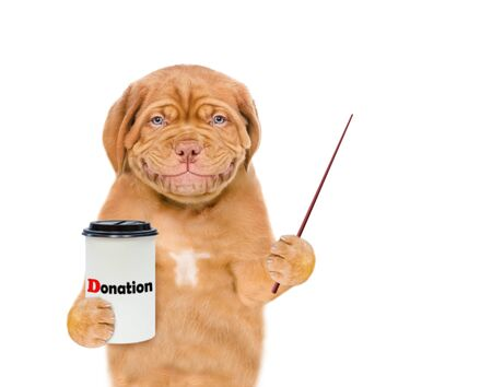 Smiling mastiff puppy with a donation can, asking money for charity and pointing away on empty space. isolated on white background.