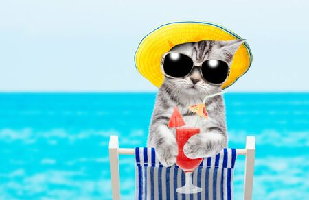Kitten resting on a deck chair in the beach with tropical cocktail. Space for text.