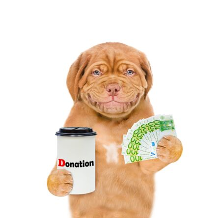 Smiling mastiff puppy with a donation can, asking money for  charity. isolated on white background. 写真素材
