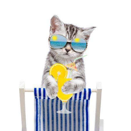 Cat with mirrored sunglasses resting on a deck chair with tropical cocktail. Isolated on white background. 免版税图像