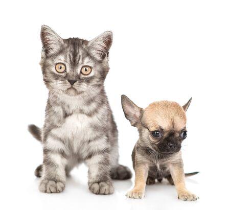 Katze und Chihuahua-Welpe sitzen zusammen in der Vorderansicht. Isoliert auf weißem Hintergrund.