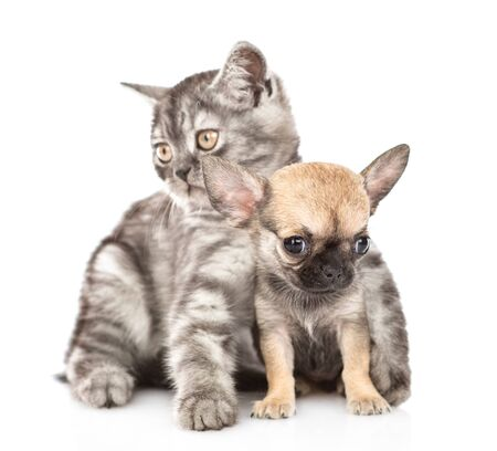 Cat hugging chihuahua puppy. Isolated on white background. 스톡 콘텐츠