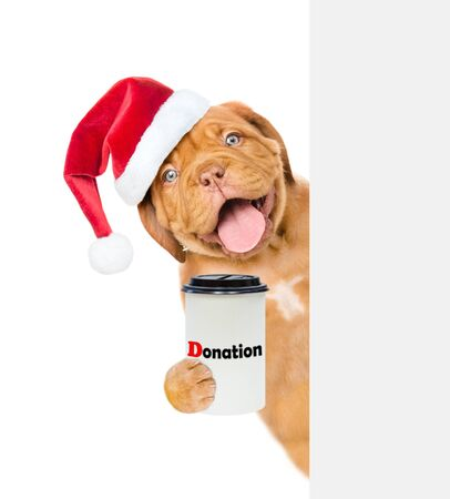 happy puppy in red christmas hat with a donation can, asking money behind white banner. isolated on white background.