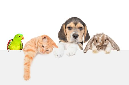 Group of pets  - rabbit,parrot,cat and dog over empty white banner. isolated on white background. Empty space for text.