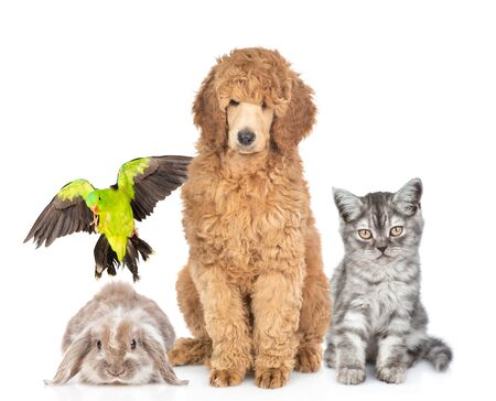 Group of pets sitting together in front view. Isolated on white background.