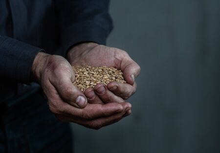 Dirty hands holding wheat handful. Empty space for text.