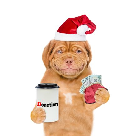 Smiling mastiff puppy in red christmas hat with dollars and donation can, asking money for  charity. isolated on white background. Banco de Imagens
