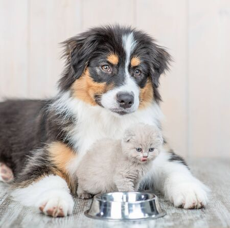 Aussie dog and kitten sitting with one bowl at home.