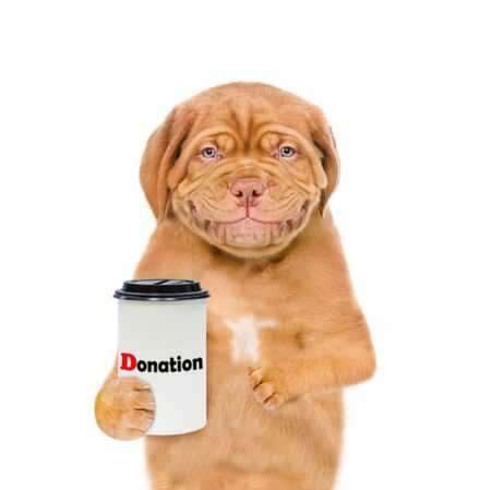 Smiling mastiff puppy with a donation can, asking money for  charity. isolated on white background. Banco de Imagens