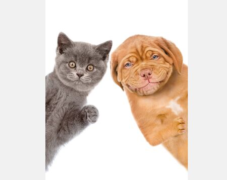 Cat and dog behind white empty banner. isolated on white background.