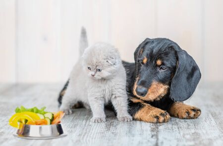 Cute baby kitten sitting with dachshund puppy on the floor at home looking on a bowl of vegetables