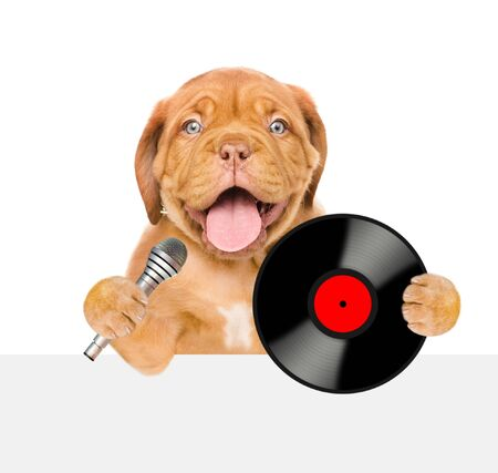 Funny puppy with vinyl record and microphone above white banner. Isolated on white background.