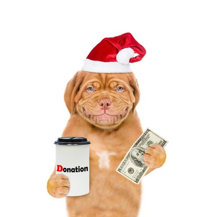 Smiling mastiff puppy in red christmas hat with dollars and donation can, asking money for  charity. isolated on white background. Zdjęcie Seryjne
