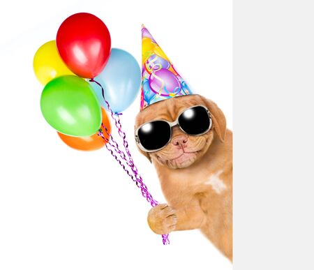 Smiling puppy in birthday hat and sunglasses holding balloons behind empty white banner. isolated on white background.