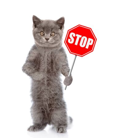 Cat holding stop sign. Isolated on white background.