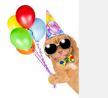 Smiling puppy in birthday hat with tie bow and sunglasses holding balloons behind empty white banner. isolated on white background. Stockfoto