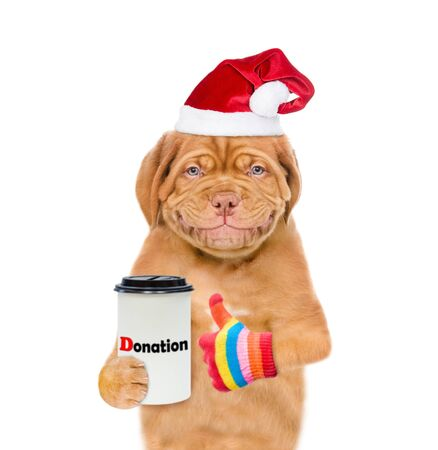 Smiling mastiff puppy in red christmas hat with a donation can, asking money for  charity and showing thumbs up. isolated on white background.