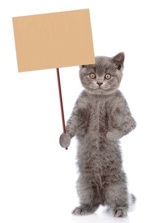 Cat holding blank banner mock up on wood stick. isolated on white background.