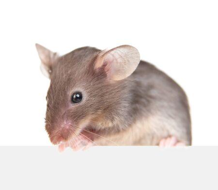 Graue Maus über leerer weißer Fahne. Isoliert auf weißem Hintergrund.