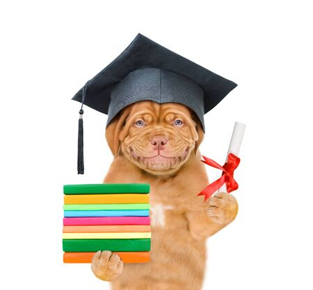 Smiling puppy in graduation hat holds a diploma and books. isolated on white background.