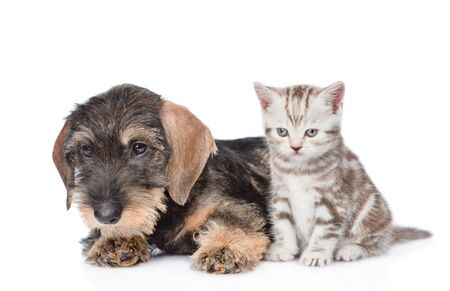 Puppy and tiny kitten sitting together. isolated on white background.