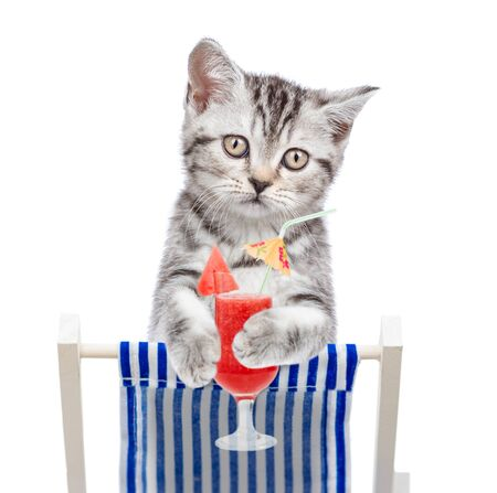 Cat resting on a deck chair with red tropical cocktail. Isolated on white background.