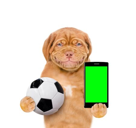 Smiling puppy holding a smartphone and soccer ball. Isolated on white background. 스톡 콘텐츠