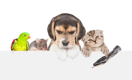 Large group of little pets  above empty white banner. isolated on white background. Empty space for text. Stock Photo