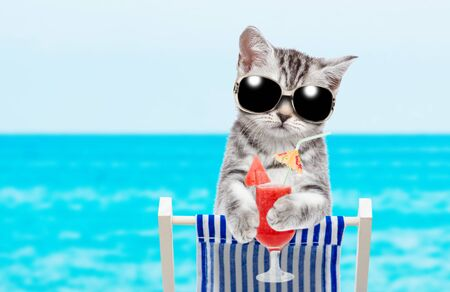 Kitten with sunglasses resting on a deck chair in the beach with red tropical cocktail. Empty space for text.