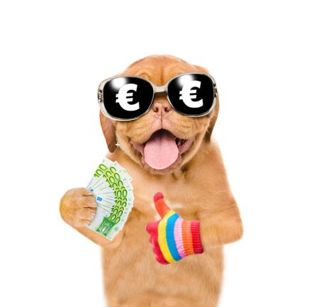 Puppy with sunglasses holding euro and showing gesture thumbs up. isolated on white background.