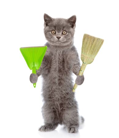 Cat holds broom and scoop. Concept cleaning up dog droppings. isolated on white background. Banco de Imagens