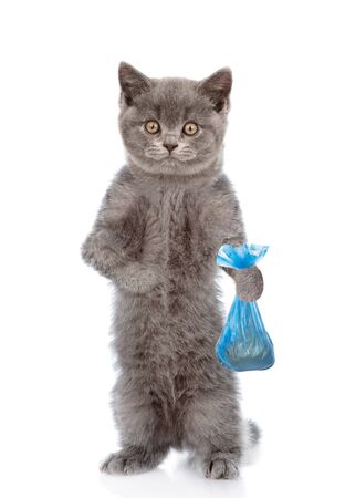Kitten holds plastic bag. Concept cleaning up pet droppings. isolated on white background.