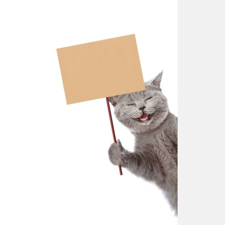 Cat behind white banner holding blank banner mock up on wood stick. isolated on white background. Stock Photo