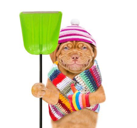 Cucciolo divertente che indossa un cappello caldo e una sciarpa con pompon, tiene una pala e spinge i pollici in su. isolato su sfondo bianco.