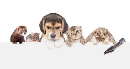 Large group of little pets above empty white banner. isolated on white background. Empty space for text.