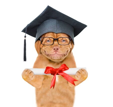 Graduated dog holds a diploma in his paws. isolated on white background. Reklamní fotografie