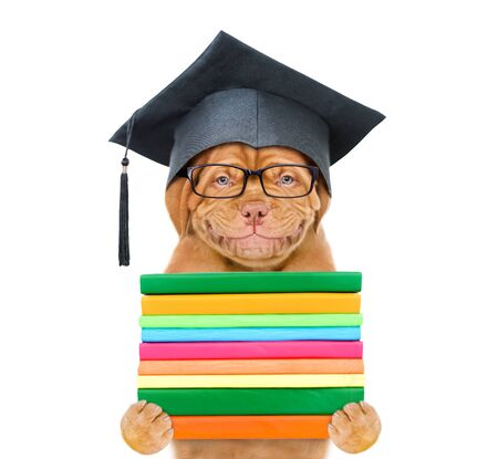 Graduated dog with eyeglasses holds books. isolated on white background. Reklamní fotografie