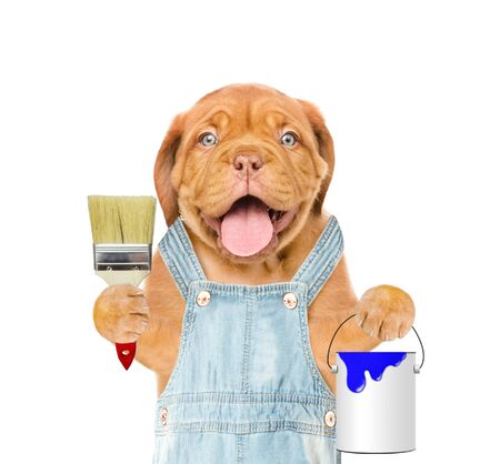 Funny puppy in overalls with paint brush and paint bucket. isolated on white background.
