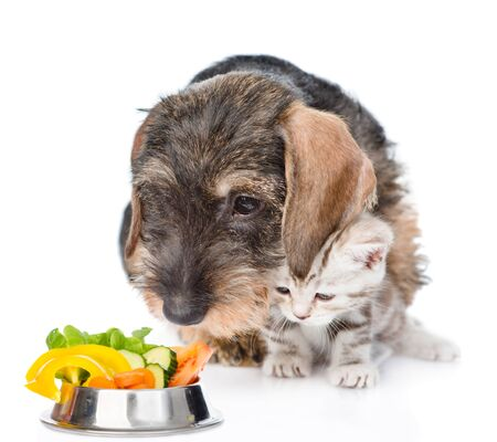 Kitten and dachshund puppy looking on a bowl of vegetables. Isolated on white background.