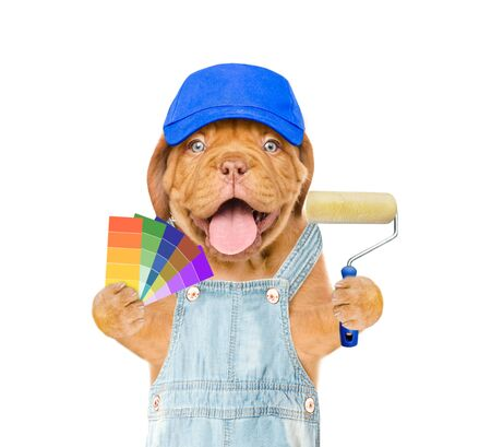 Funny puppy in blue hat and overalls with color samples and paint roller. isolated on white background.