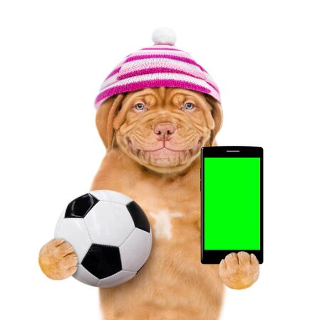 Smiling puppy with warm hat holding a smartphone and soccer ball. Isolated on white background. 스톡 콘텐츠