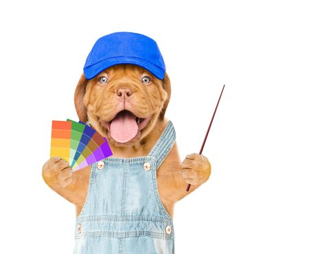 Funny puppy in blue hat with color samples pointing away on empty space. isolated on white background. Imagens