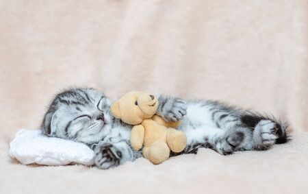 Baby kitten sleeping with toy bear on pillow.